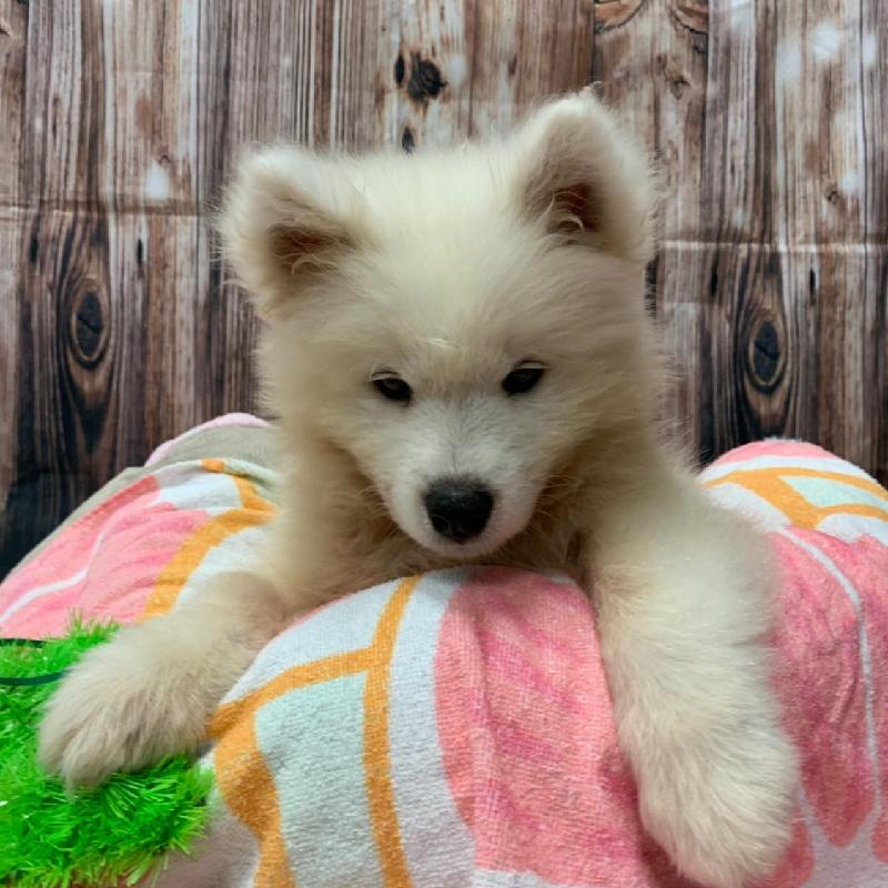 Puppies For Sale | Monroeville, PA | Visit Petland