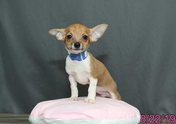 Puppies For Sale | Monroeville, PA | Visit Petland