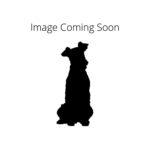 Petland Monroeville, PA Redbone Coonhound