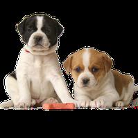 Adopt-a-Pet℠ Program