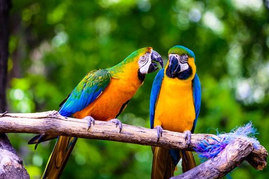 Our Birds - Petland Monroeville